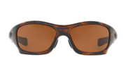 Pit Bull™ (Asia Fit) - Brown Tortoise