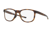 Polished Brown Tortoise